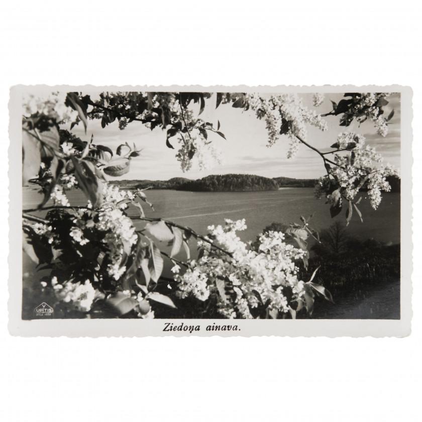 """Fotogrāfija """"Ziedoņa ainava"""""""