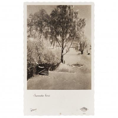 """Photography """"Frozen birches"""""""