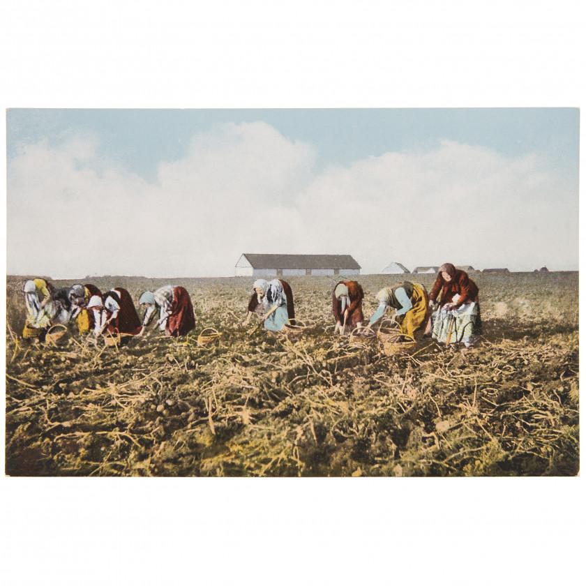 "Postcard ""Potato digging in Livonia"""